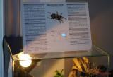 muzeul-antipa-paianjeni-scorpioni-5.JPG