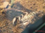 muzeul-antipa-paianjeni-scorpioni-7.JPG