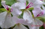 Sighisoara-Sigma-12-24-HSM-Nikon-8-crop.jpg