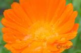 Sighisoara-Sigma-12-24-HSM-Nikon-121-crop.jpg
