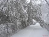 iarna-zapada-bucuresti-41.JPG