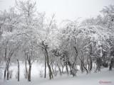 parcul-tineretului-iarna-zapada-bucuresti-10.JPG