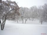parcul-tineretului-iarna-zapada-bucuresti-11.JPG
