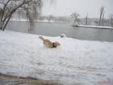 parcul-tineretului-iarna-zapada-bucuresti-20.JPG