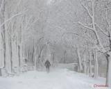 parcul-tineretului-iarna-zapada-bucuresti-6.JPG