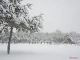 parcul-tineretului-iarna-zapada-bucuresti-7.JPG