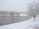 parcul-tineretului-iarna-zapada-bucuresti-33.JPG