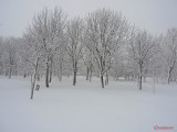 parcul-tineretului-iarna-zapada-bucuresti-41.JPG