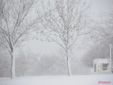 parcul-tineretului-iarna-zapada-bucuresti-43.JPG