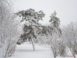 parcul-tineretului-iarna-zapada-bucuresti-47.JPG