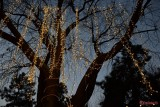 luminite-craciun-oraselul-copiilor-bucuresti-2016-4.jpg