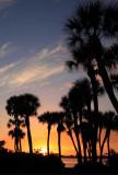 IMG_2600a Palm Trees.jpg