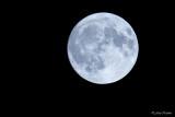 Volle maan/Full moon