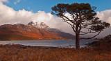 Lonesome Pine by Loch Maree