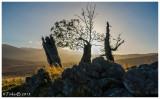 Ents at Bovaglie overlooking Lochnagar