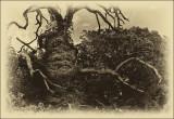 Devil's Wood