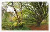 The Arboretum, Dyffryn Gardens