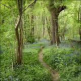 Lower Wood, Ashwellthorpe, Norfolk