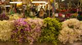 bangkok flower market-5.jpg