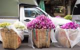 bangkok flower market-12.jpg