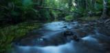 Daintree-rain-forest-Far-north-queensland-3.jpg