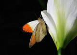 Papillons en liberté - 2016