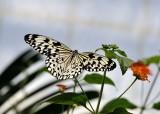 Papillons en liberté - Édition 2016