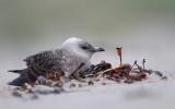 DANISH BIRDS 2013