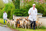 Meath Foxhounds on the March