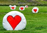 Love-sick Farmer?