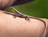 Friendly Gecko