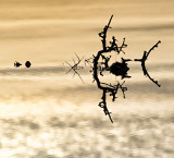 Flooded Burren Bush