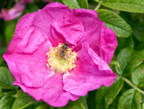 Busy Bee + Bristly Rose
