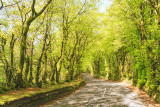 Country Road - Spring Foliage