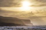 Bird Flock - Winter Sunset