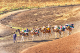 Volcanic Camel Train
