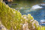 Cliffside Nesting