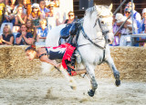 Camargue Horse Manoeuvres
