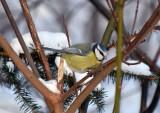 Birds seen in Sweden 2016