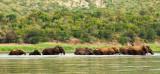 Elephants Phongolo river Pongola Nature reserve PSLR -8949.jpg