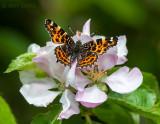 Landkaartje - Map Butterfly PSLR-3268.jpg