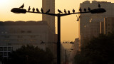 Bird's Silhouettes