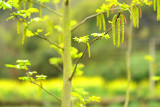 Greenish Green