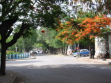 A typical tree-lined Dire Dawa street