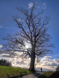 Afternoon walk ....