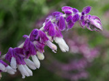 violet felt