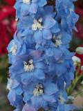 Blue flower column
