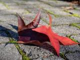 dance of leaves ...