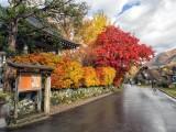 nice walk in Autumn