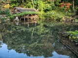 Kasumi Pond, November